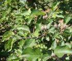 Rok obfitego kwitnienia drzew owocowych