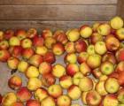 Czy coś nowego w eksporcie jabłek?