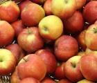 Ceny skupu jabłek w spółdzielniach w 5 tygodniu 2016 r.