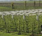 Francja – sadownictwo subsydiowane