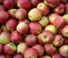 Geoxe – skutecznie chroni jabłka i gruszki przed chorobami przechowalniczymi